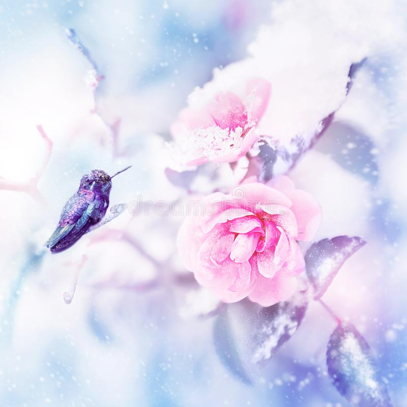 Little fantastic blue and purple bird in the snow and frost on the background of beautiful pink roses. Artistic Christmas winter i. Mage. Selective focus. Blue stock photography