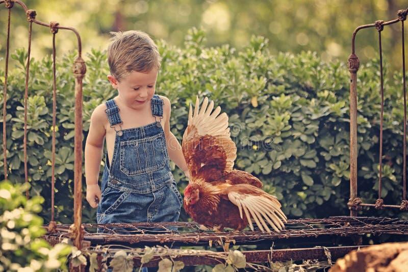 Little farm boy holding red chicken. Boy eating sandwich fishing bridge royalty free stock photos