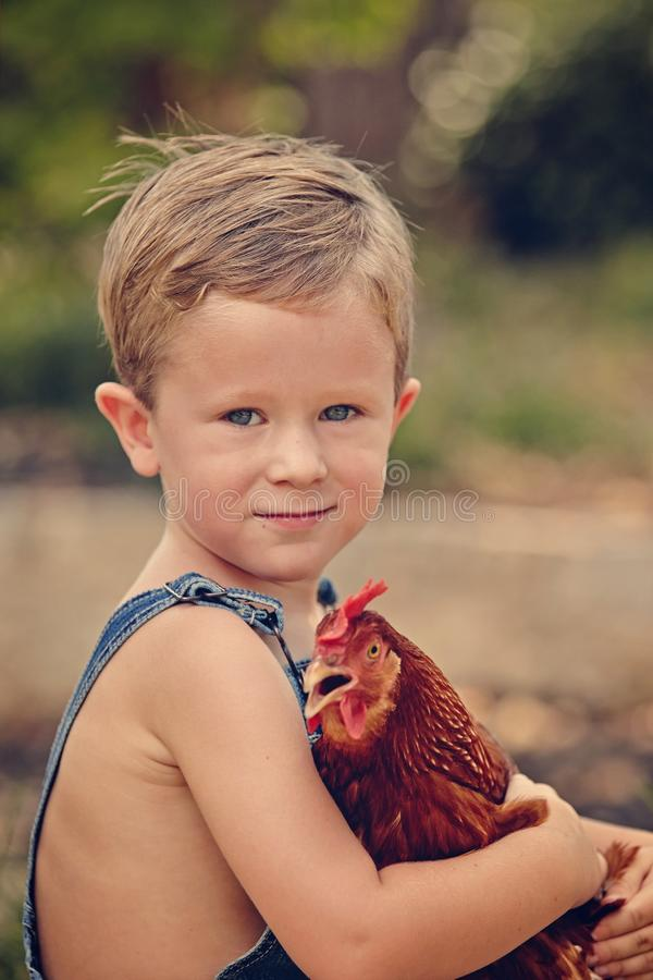 Little farm boy and red chicken. Farm boy with chicken royalty free stock images