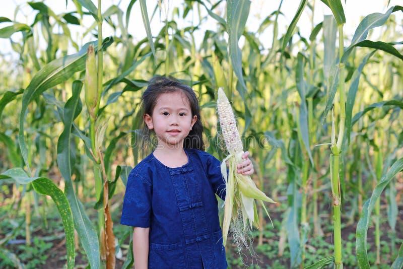 Little farmer harvest fresh corn on agriculture plantation royalty free stock image