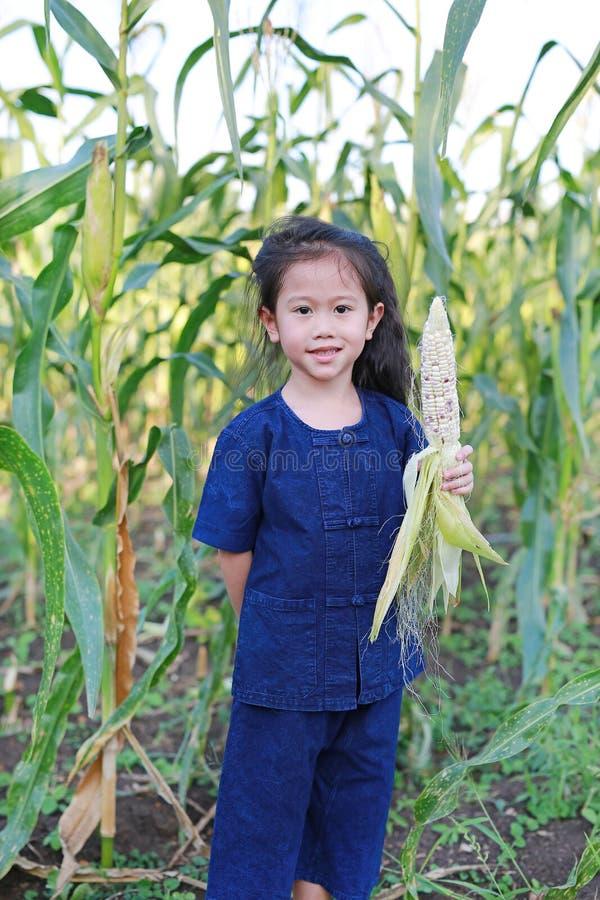 Little farmer harvest fresh corn on agriculture plantation royalty free stock photos