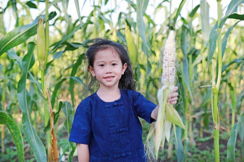 Little farmer harvest fresh corn on agriculture plantation stock photo