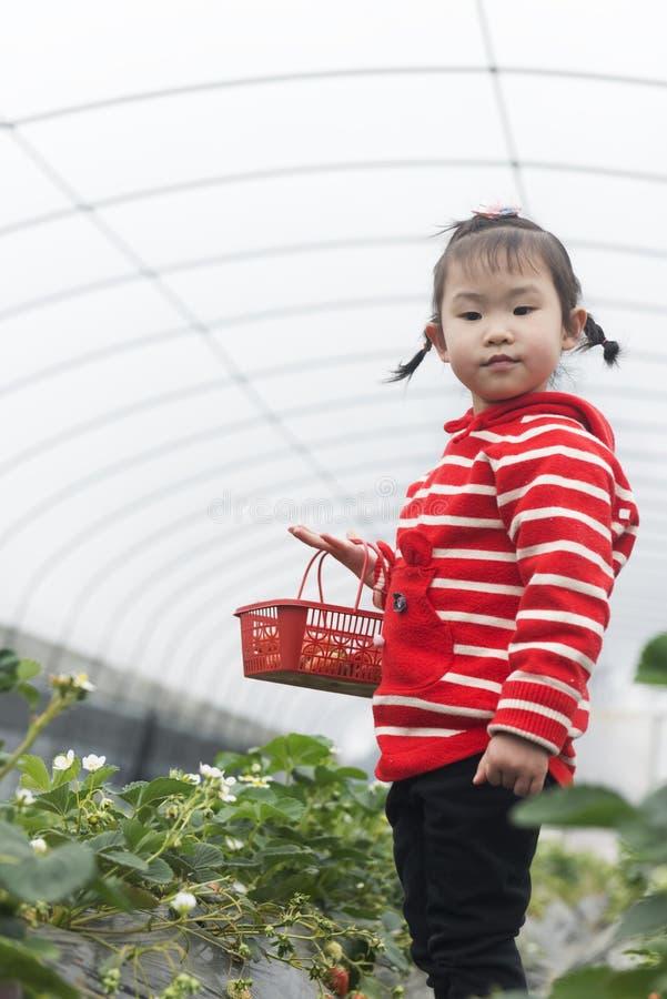 Free Little Farmer Portrait In Greenhouse Stock Photos - 217630343