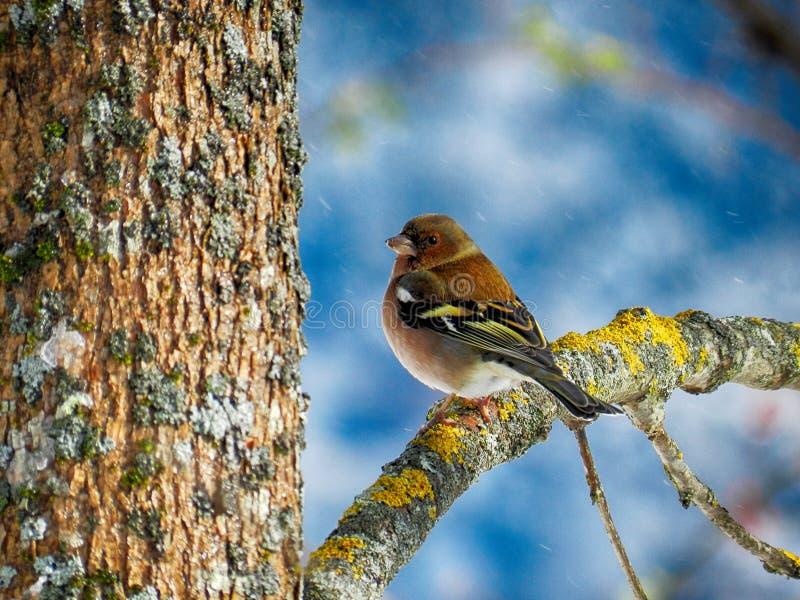 Little Finches stock photos