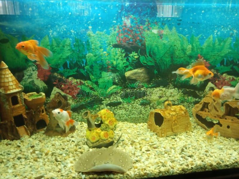 Little fish stock image
