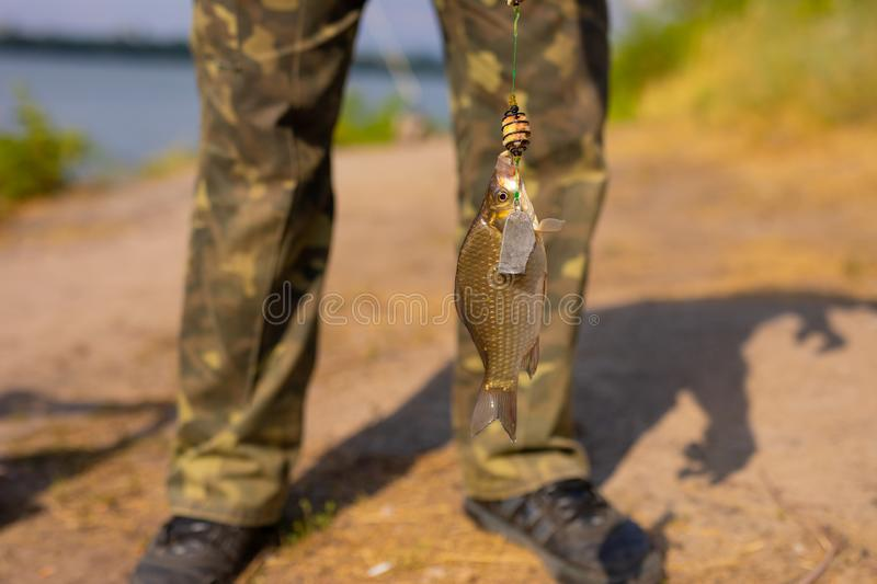 Little fish on a hook. Little fish on the hook stock images