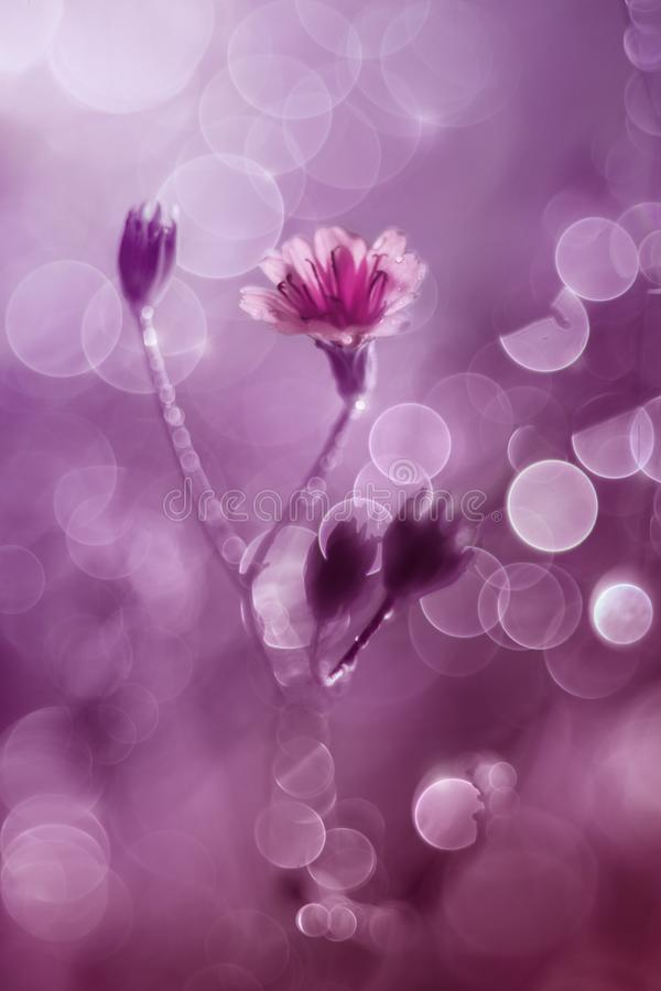 Little flower with bubble bokeh stock images