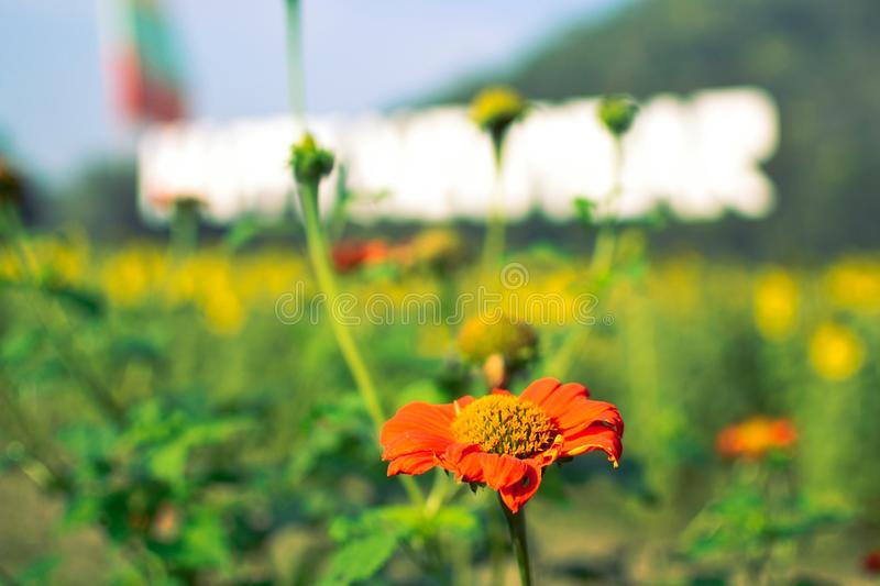 A little flower in the garden. In blooming. Petal. Little flower garden blooming petal fresh goodday royalty free stock images