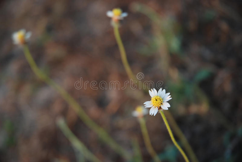 Little flower in the morning royalty free stock image