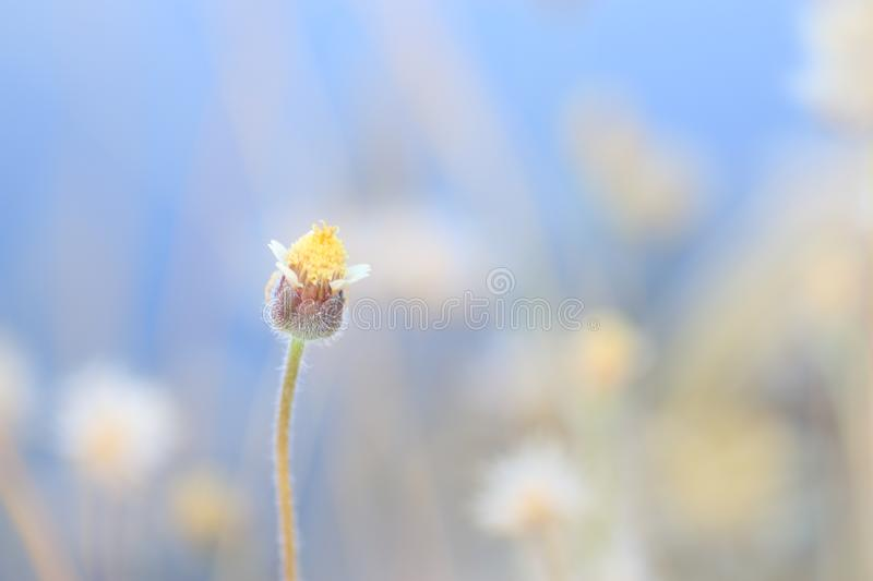 Little flower royalty free stock photography