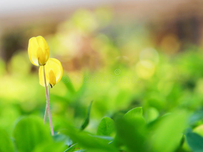 Little flower. In the world royalty free stock photos