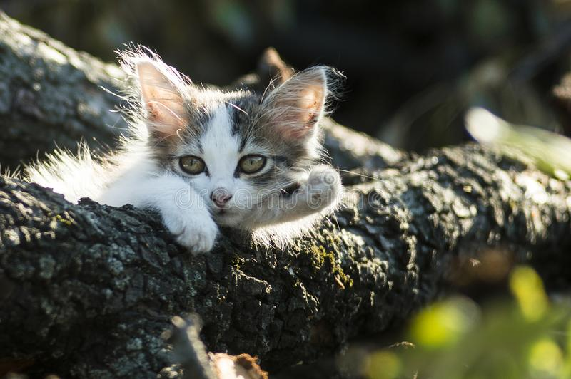 Little fluffy curious tired kitten. Cute black and white cat stock photo