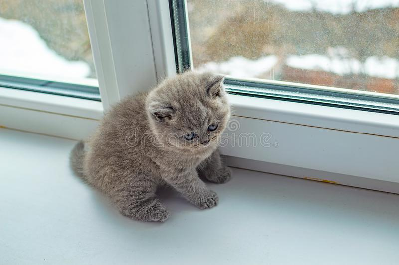 Little fluffy kitten playing royalty free stock photos
