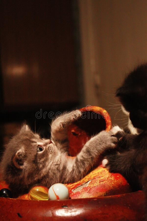 Kittens and didgeridoo royalty free stock image