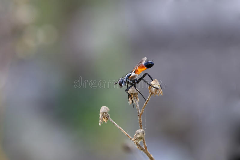 Little fly on a branch of dried chamomile royalty free stock photos