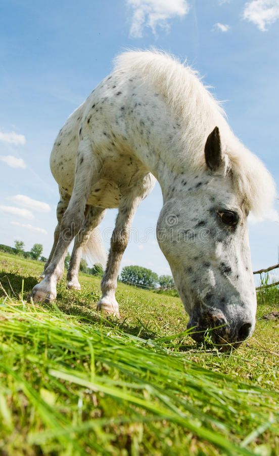 Download Little foal stock image. Image of green, down, meadow - 21120909