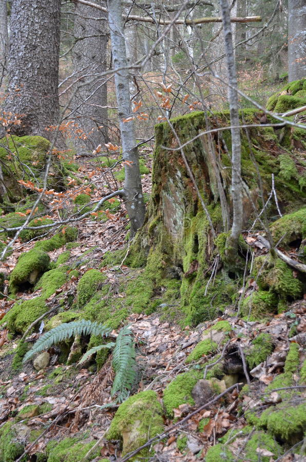 Little Forest near Grenchen stock photography