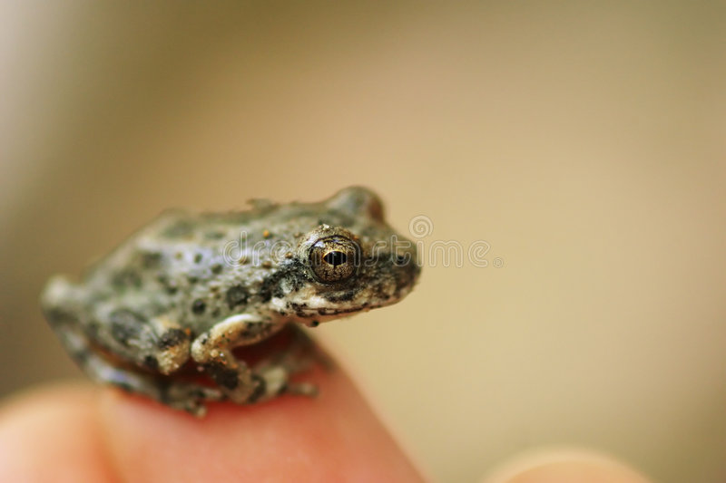 Little frog stock images