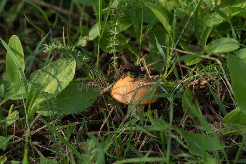 Little frog sitting on a hat of mushroom stock image