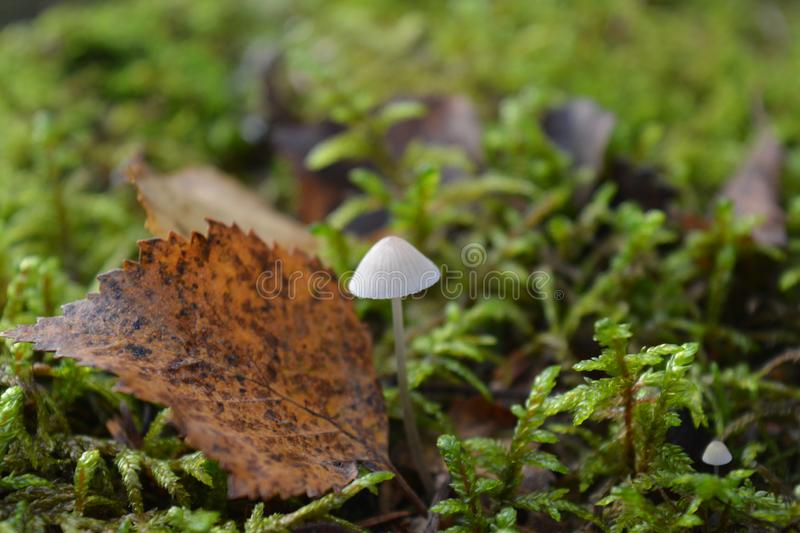 Little fungus in the autumn forest stock images