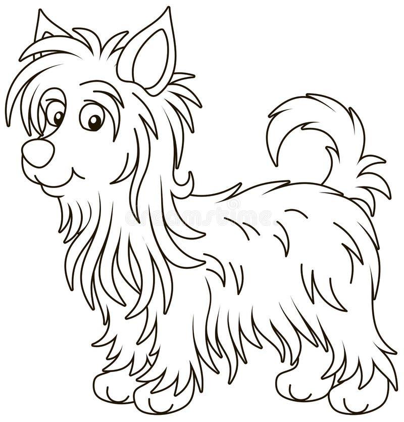 Free Little Funny Australian Silky Terrier Stock Photo - 136948320
