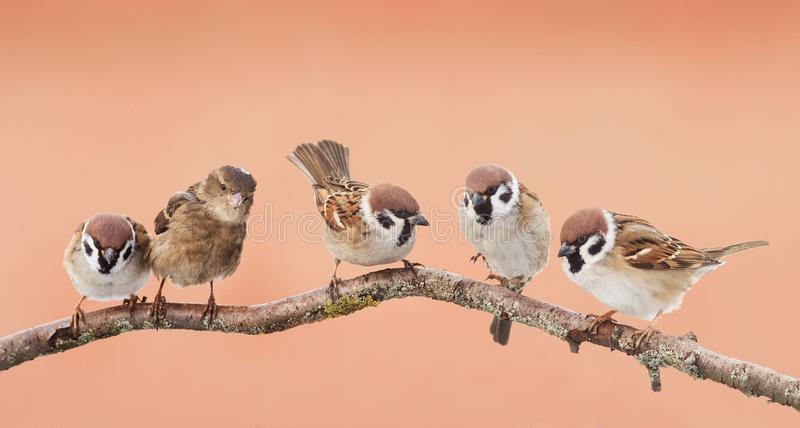 Little funny birds sitting on a branch and looking curiously stock image
