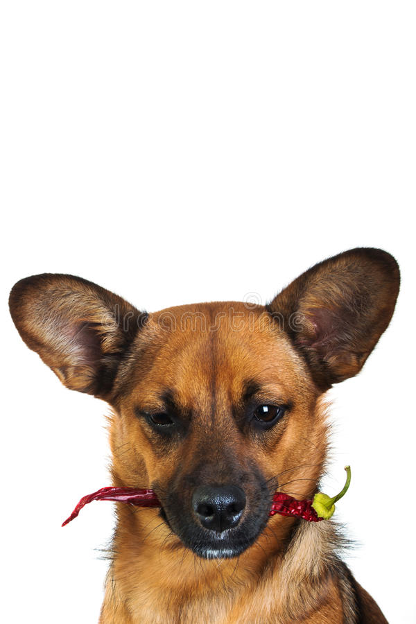 Little funny dog stock photo