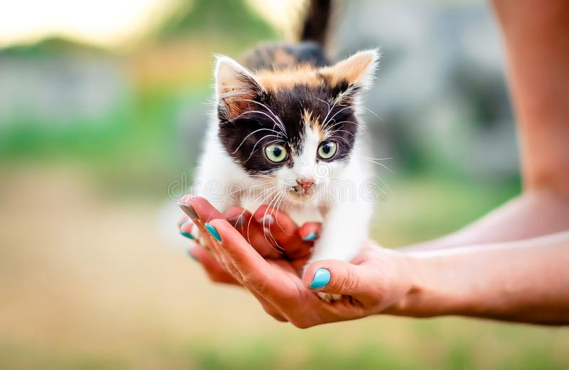 Little furry kitten stock photos