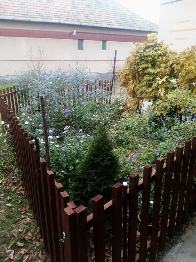 Little garden royalty free stock image