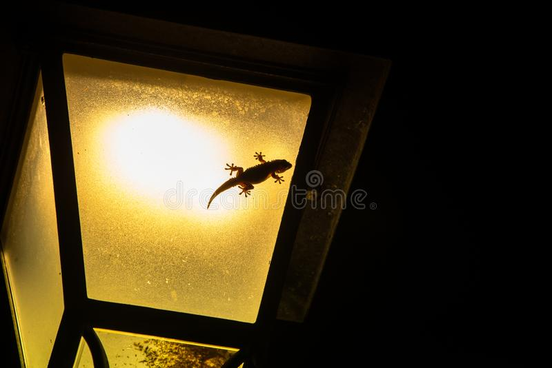 Little gecko baby lizard on a lamp royalty free stock photos