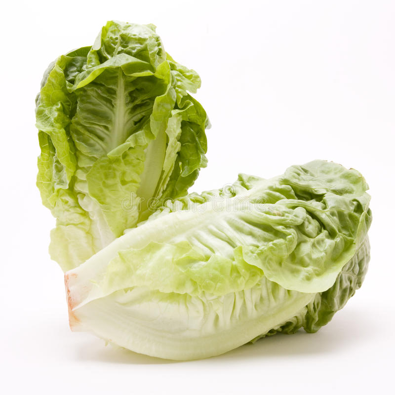 Free Little Gem Lettuce Royalty Free Stock Photography - 12060647