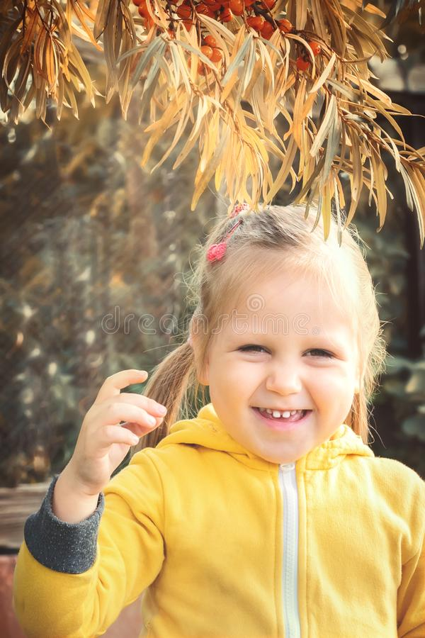 Little girl baby eats seasonal sea-buckthorn berries. Little girl baby in yellow jumpsuit suit with blond hair gathers and bites off eats seasonal sea-buckthorn royalty free stock photo