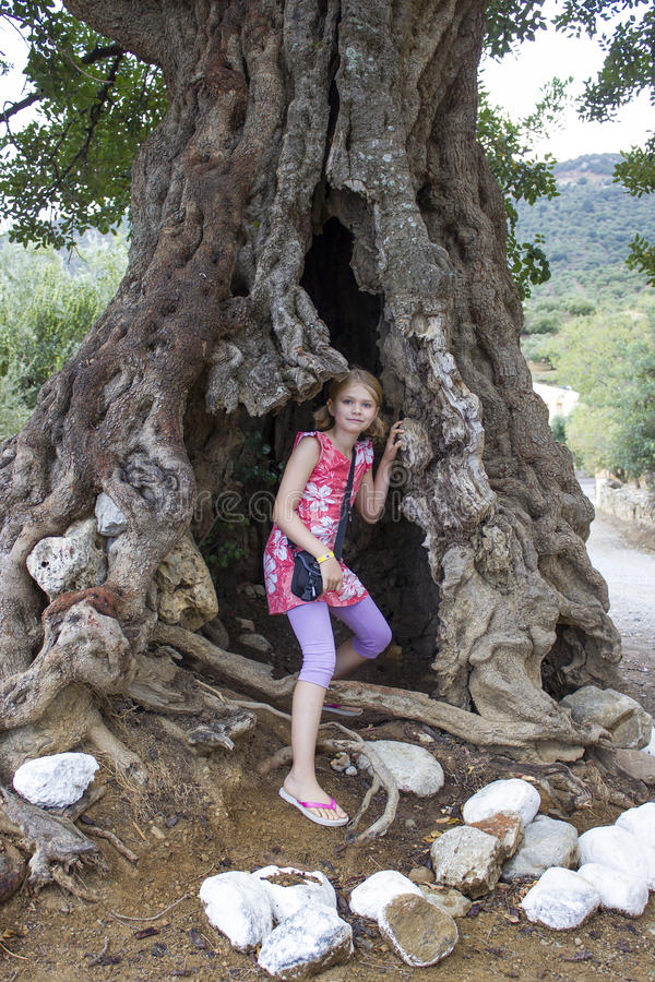 Little girl in a big olive tree royalty free stock images