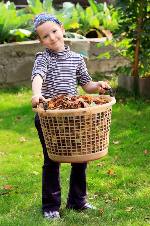 Little girl with the big plastic basket full of leaves stock photos