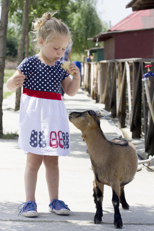 Little girl and billy goat. Little girl eating ice cream and being followed by billy goat