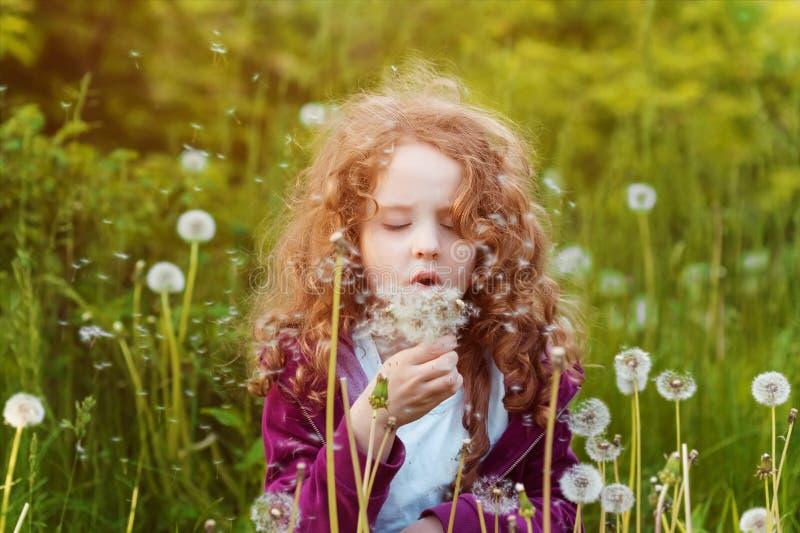 Little girl blowing dandelion. Background toning instagram filter. royalty free stock image
