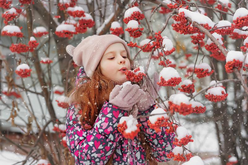 Little girl blows off snow from a rowan branch stock photo