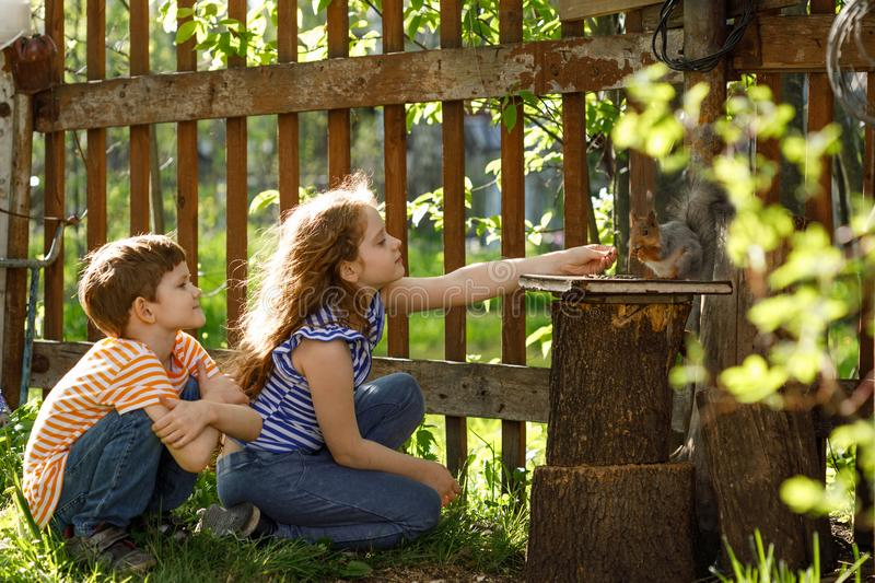 Little girl and boy feeding a squirrel. Life in the village. royalty free stock images