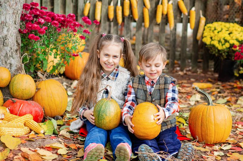 Little girl and boy picking pumpkins for Halloween pumpkin patch. Children pick ripe vegetables at the farm during the holiday. Season. Autumn harvest concept royalty free stock photos