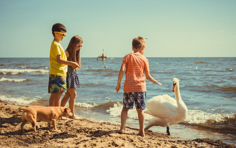 Little girl boys kids on beach have fun with swan. royalty free stock image
