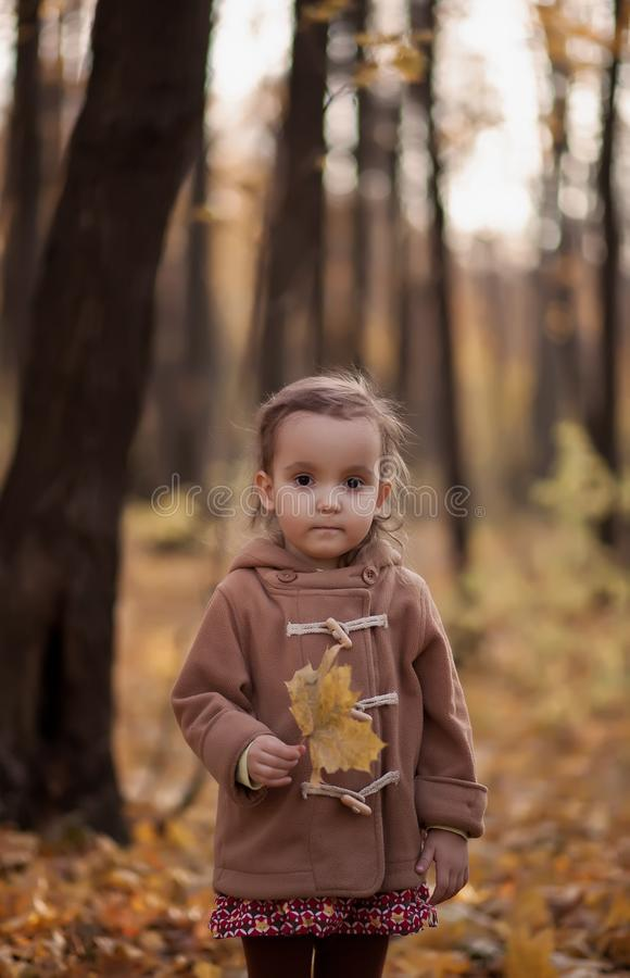 Little girl on a brown coat holds maple leaf outdoors. Autumn time. Happy child playing at fall nature background royalty free stock images