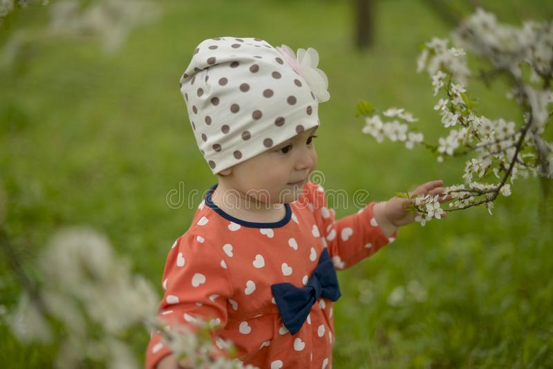 A little girl in a cap stands next to a blooming Apple tree on a spring royalty free stock photography
