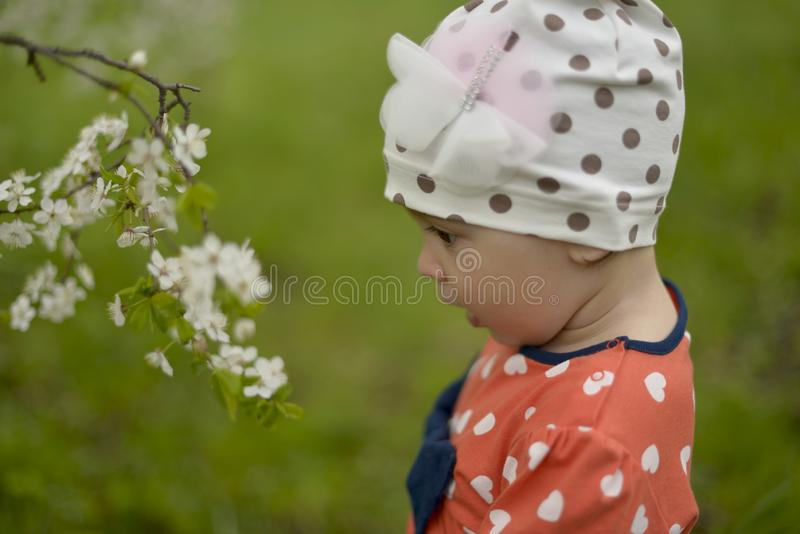 A little girl in a cap stands next to a blooming Apple tree on a spring royalty free stock photo
