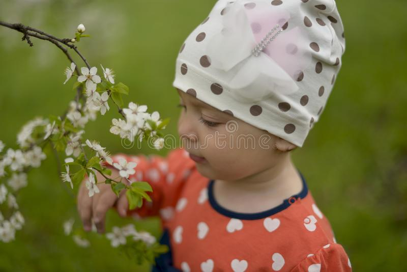 A little girl in a cap stands next to a blooming Apple tree on a spring stock photos