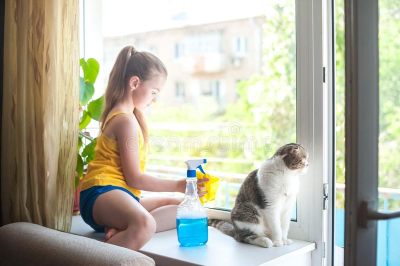 A little girl with a cat on the windowsill washes the windows. Focus on the British cat. A little girl with a cat on the windowsill washes the windows. Focus on royalty free stock photos