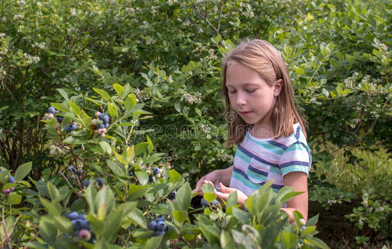 Little girl chooses the perfect blueberries stock images