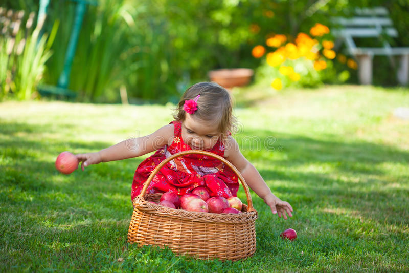 Download Little Girl Collects The Apples Stock Image - Image: 21542595