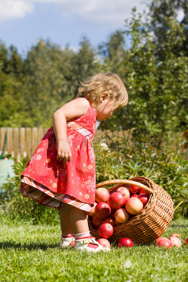 Little girl collects the apples. Scattered on a grass in a basket stock photo