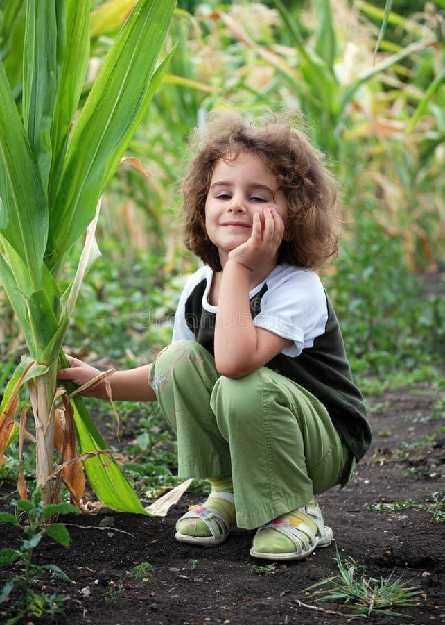Little girl in corn royalty free stock photo