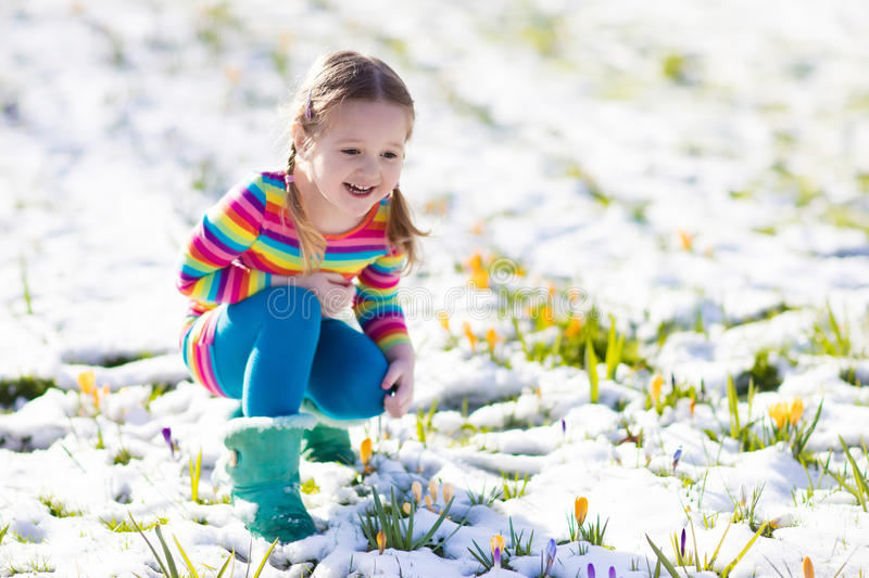 Little girl with crocus flowers under snow in spring royalty free stock image